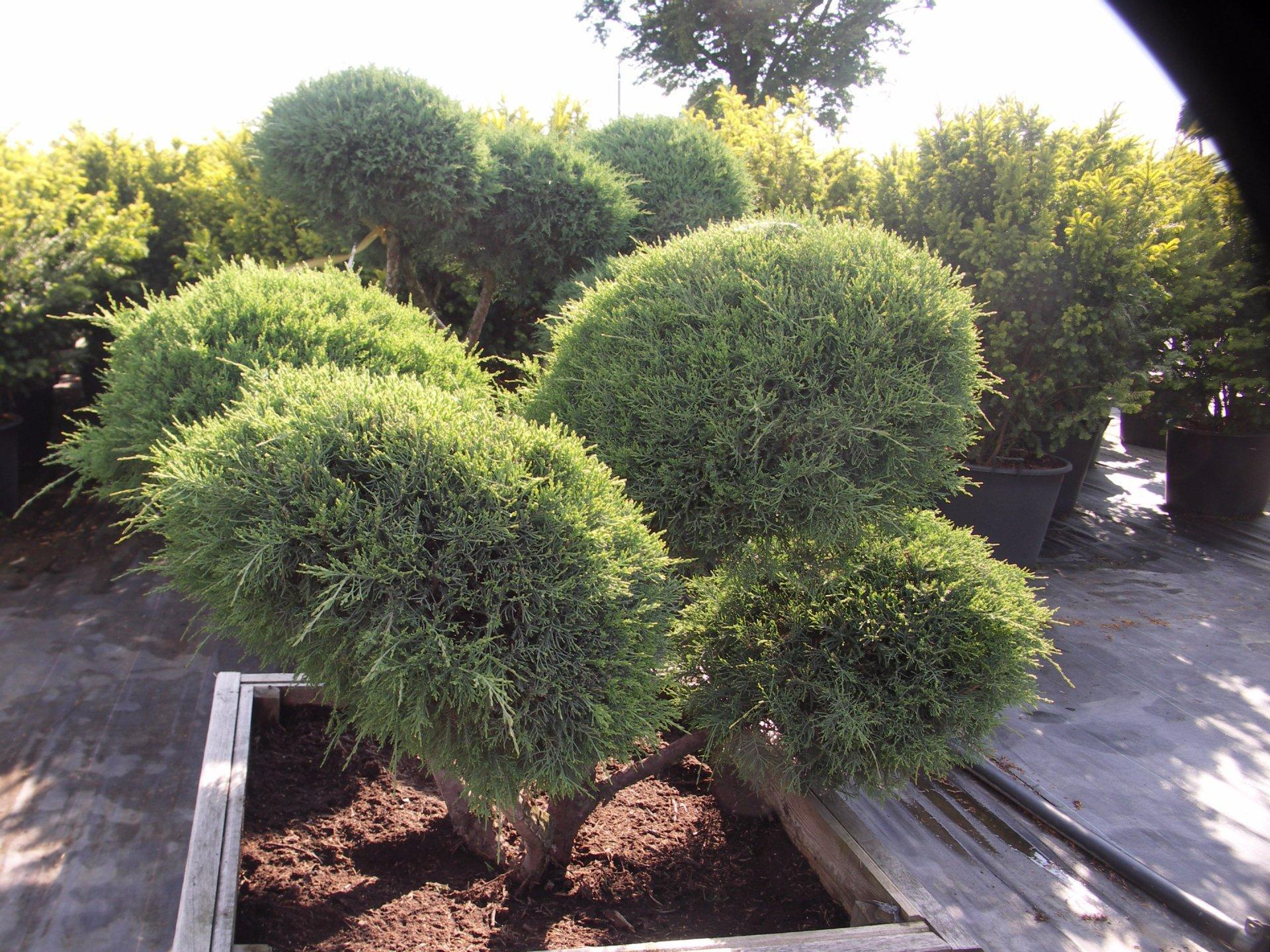 ornamental plants nursey